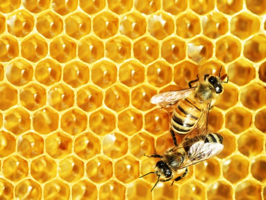 """The Manuka Project: Finding """"real honey"""", and not wasting"""